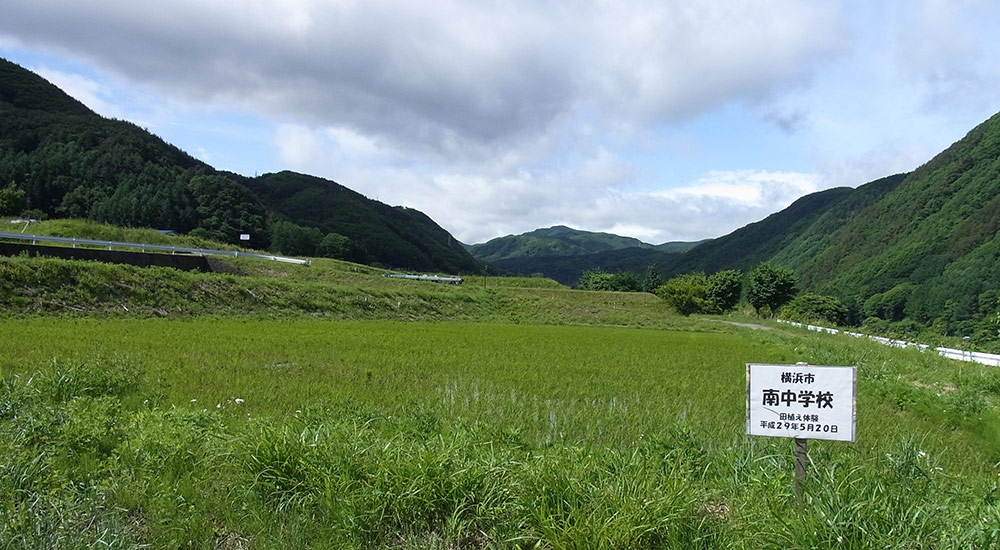 横浜市立南中学校田植えの記録060802