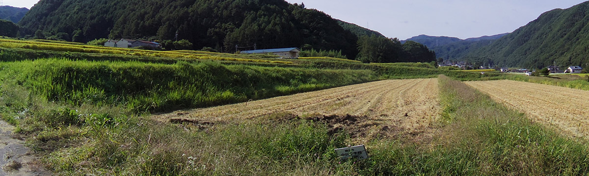横浜市立中川中学校田植えの記録091511